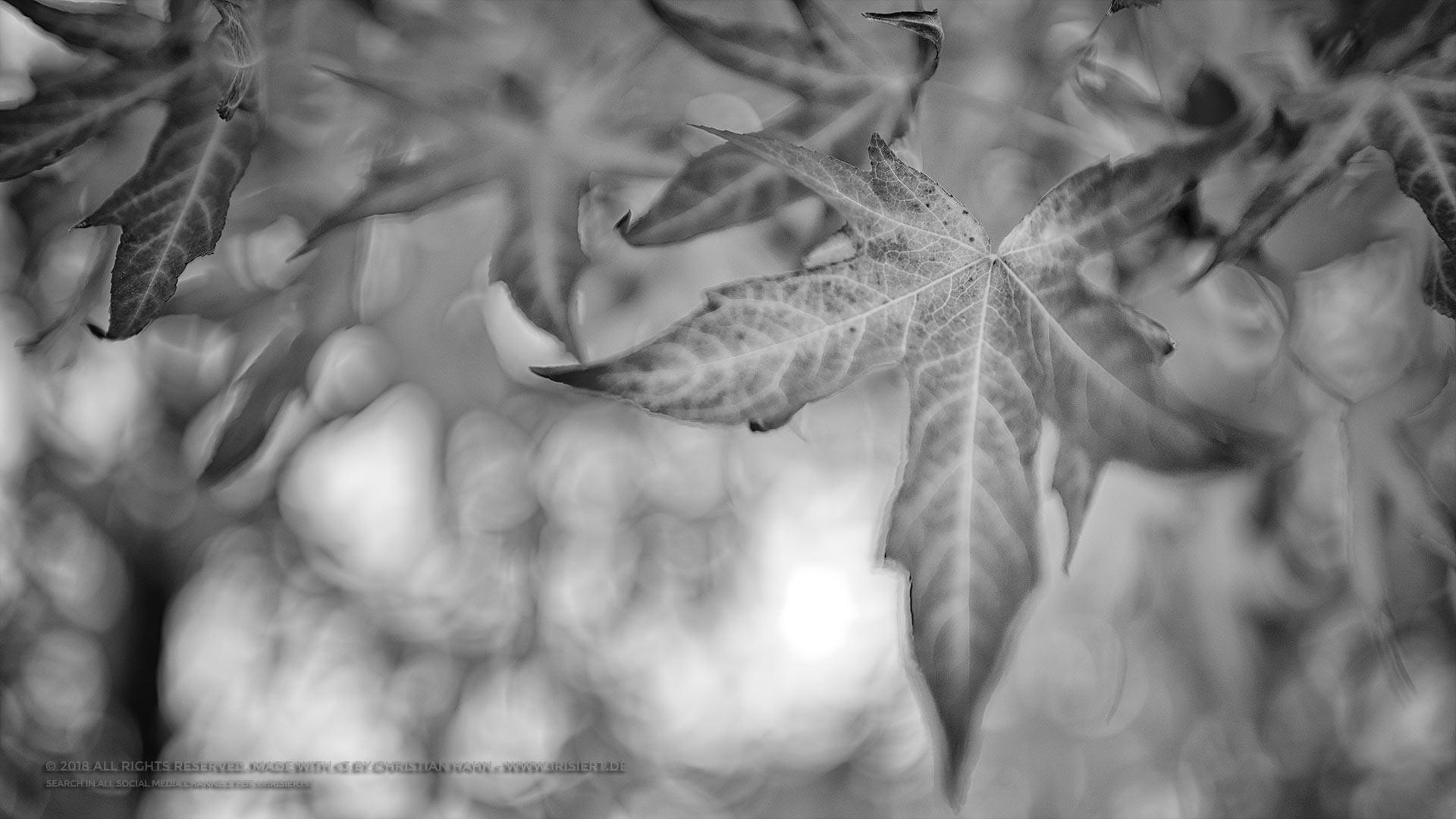 Natur In Schwarz Weiss Irisiert Im Diffusen Licht Polaroid Sx 70
